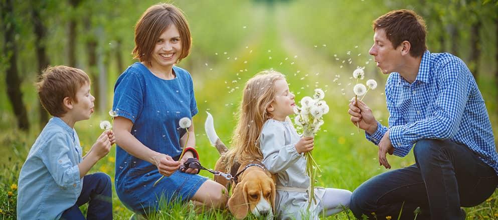 Familie in het gras met paardenbloemen